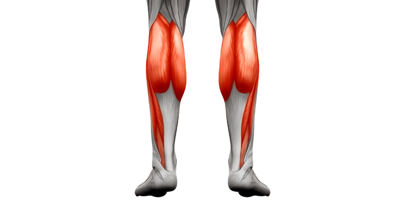 The Science of Growing your Calf Muscles